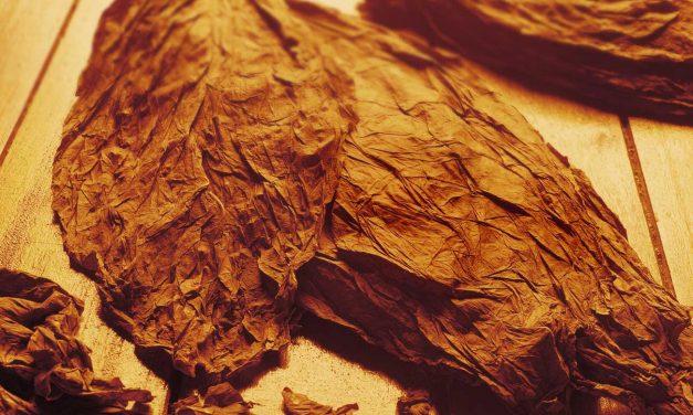 Matéria | Essências e Tabacos